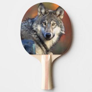 オオカミの写真 卓球ラケット