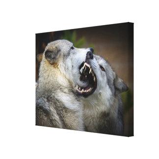 オオカミの戦い キャンバスプリント