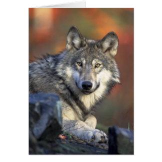 オオカミの挨拶状 カード