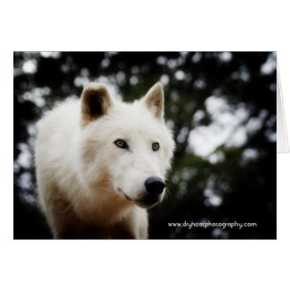オオカミの挨拶状/嵐1 カード