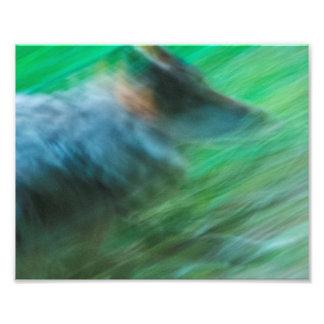 """オオカミの速度10"""" x 8""""、コダックプロ写真の紙(サテン) フォトプリント"""