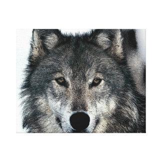 オオカミはキャンバスプリントを注目します キャンバスプリント
