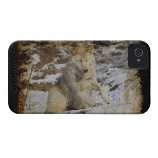 オオカミ及び雪のオオカミ恋人の野生動物の男性指導者 Case-Mate iPhone 4 ケース