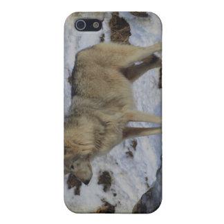 オオカミ及び雪のオオカミ恋人の野生動物の男性指導者 iPhone 5 COVER