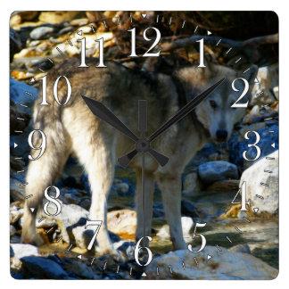 オオカミ及びStony Creekの写真の時計 スクエア壁時計