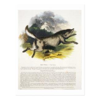 オオカミ(イヌ属ループス)の教育イラストレーションpu ポストカード