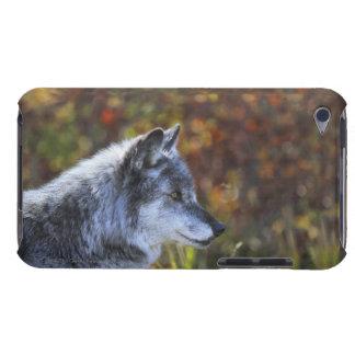 オオカミ(イヌ属ループス) Case-Mate iPod TOUCH ケース
