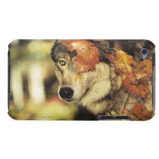オオカミ(イヌ属ループス)、headshot、秋色と、 Case-Mate iPod touch ケース