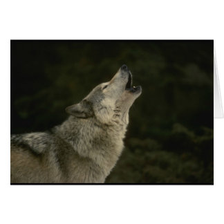 オオカミ カード