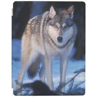 オオカミ、3のふもとの小丘のイヌ属ループス、 iPadスマートカバー