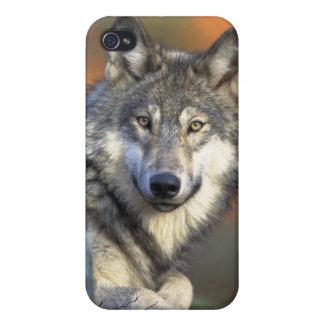 オオカミ iPhone 4/4S COVER