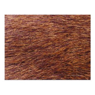 オオシカの毛皮 ポストカード