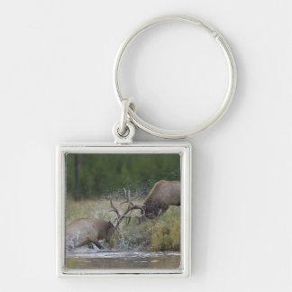 オオシカの闘牛、イエローストーンNP、ワイオミング キーホルダー