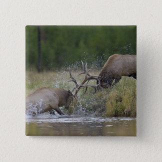 オオシカの闘牛、イエローストーンNP、ワイオミング 5.1CM 正方形バッジ