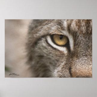 オオヤマネコの目 ポスター