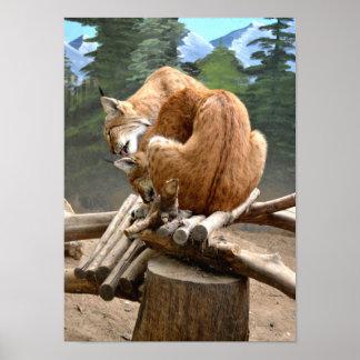 オオヤマネコ猫 ポスター