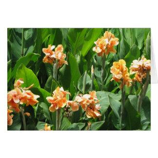 オクラホマの花 カード