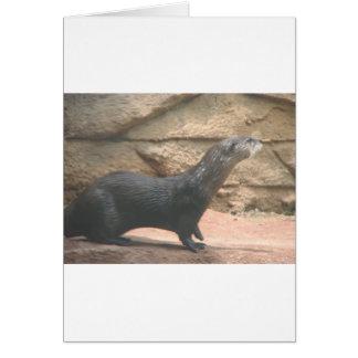オクラホマシティーの写真の動物 カード