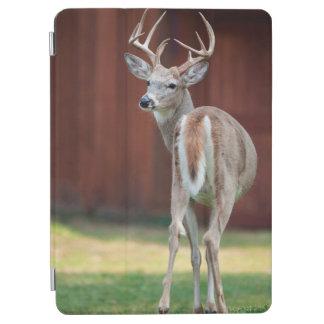 オジロ鹿の木びき台のポートレート、Missoula、モンタナ iPad Air カバー