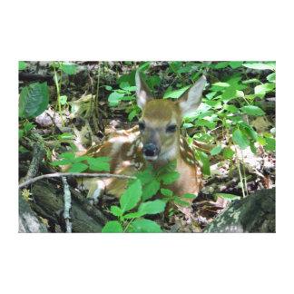 オジロ鹿シカの子鹿のキャンバスプリントのプリント キャンバスプリント