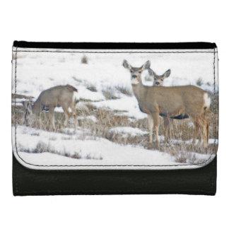 オジロ鹿シカの子鹿の野性生物動物のベビー