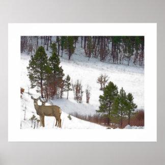 オジロ鹿シカの野性生物動物の子鹿 ポスター
