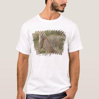 オスのチータ、Acinonyxのjubatus、Serengeti、 Tシャツ