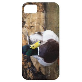オスのマガモのアヒル iPhone SE/5/5s ケース