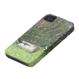 オスのマガモは場合を引込めます Case-Mate iPhone 4 ケース