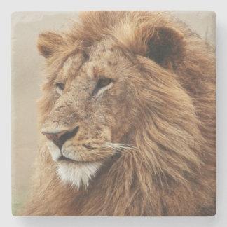 オスのライオンのクローズアップ ストーンコースター