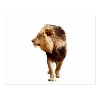 オスのライオン ポストカード