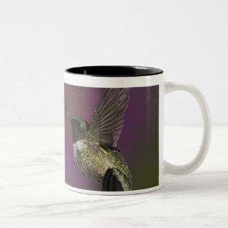 オスのルビー色のthroatedハチドリ、Archilochus 2 ツートーンマグカップ