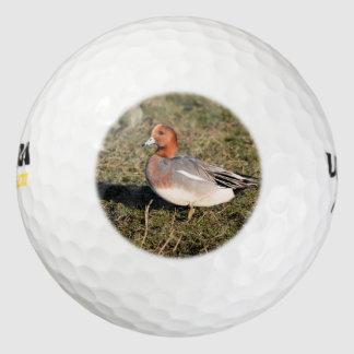 オスの欧亜のWigeonのアヒルは草が茂った分野で歩きます ゴルフボール