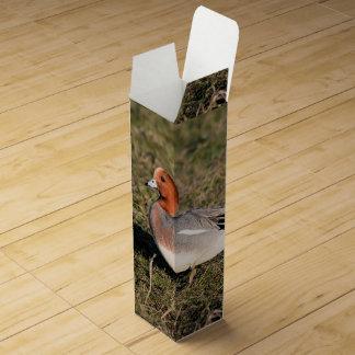 オスの欧亜のWigeonのアヒルは草が茂った分野で歩きます ワインギフトボックス