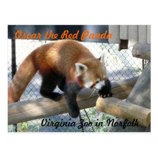 オスカーノーフォークの動物園のレッサーパンダ ポストカード