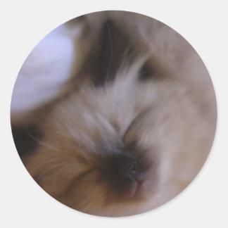 オスカー子ネコ ラウンドシール