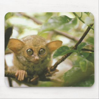 オセアニア、インドネシア、スラウェシ。 Tarsierのtarsius マウスパッド