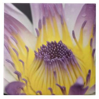 オセアニア、フィージー、紫色のパナマPacifica Nymphea タイル