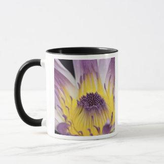 オセアニア、フィージー、紫色のパナマPacifica Nymphea マグカップ