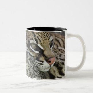オセロット、ネコ属のpardalis、捕虜、女性の休息 ツートーンマグカップ