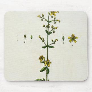 オトギリソウは、「好奇心が強い草」からの15をめっきします、 マウスパッド