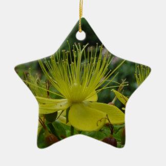 オトギリソウ属-黄色い花 セラミックオーナメント
