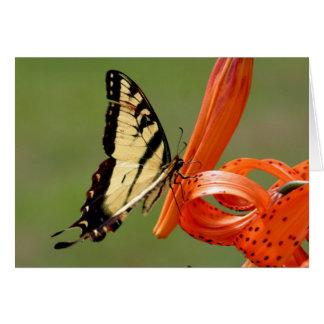 オニユリのアゲハチョウ カード