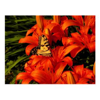 オニユリの蝶 ポストカード