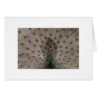 オパールの孔雀の表示 カード
