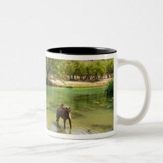 オマーンのワジのdarbat、で牧草を食べているヒトコブラクダ ツートーンマグカップ