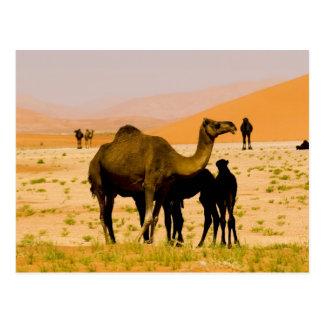 オマーンの摩擦AlのKhaliの砂漠、ラクダ(ヒトコブラクダ)、 ポストカード