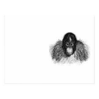 オランウータン猿のチンパンジーのエレガントなスケッチ ポストカード