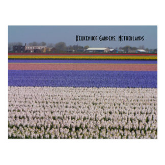 オランダの花 ポストカード