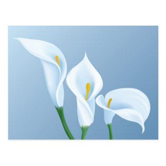 オランダカイウの花 ポストカード